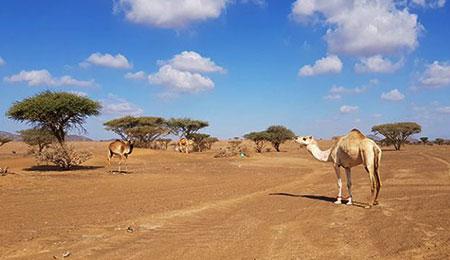Wüsten des Orients